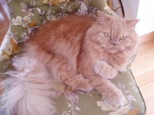 El gatito Leo