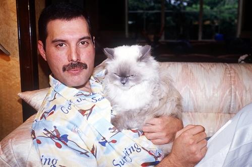 Freddie con uno de sus gatos.